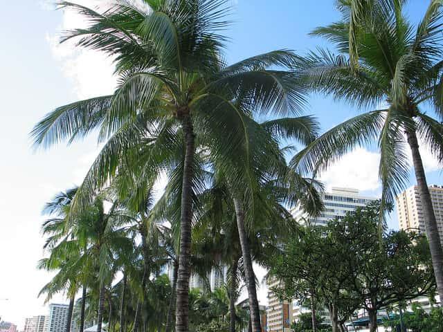 ハワイに一人旅、楽しめるか