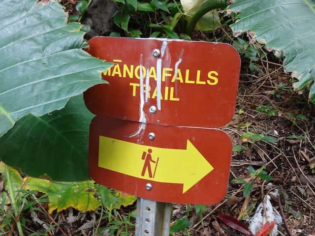 ワイキキから20分で行ける大自然マノア・フォールズ・トレイルの魅力