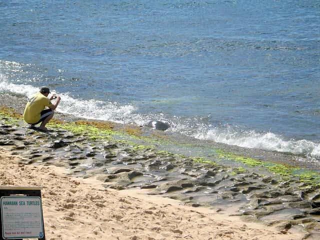 遭遇率100%のウミガメビーチにカメがいなかった時の体験談