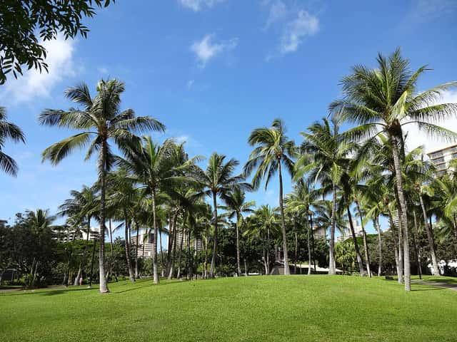 ハワイ旅行に役立つ厳選ホームページのリスト