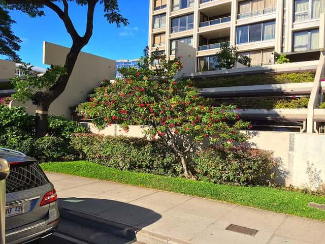 シニア世代のハワイ旅行でコンドミニアムに宿泊するメリット
