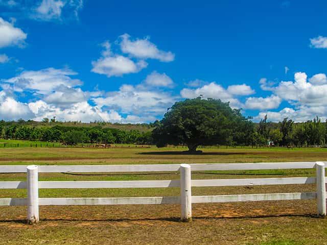 初ハワイの人は必見!ハワイ旅行の計画に役立つオンライン地図