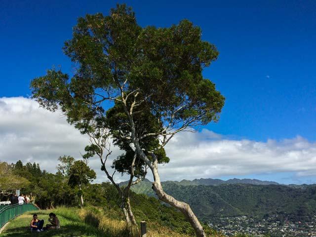 初ハワイでも行きやすいオアフ島の絶景スポットとその行き方