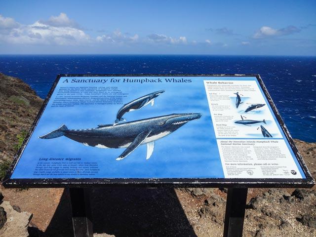船が苦手な人へ!ハワイで陸上からクジラを楽しむ方法