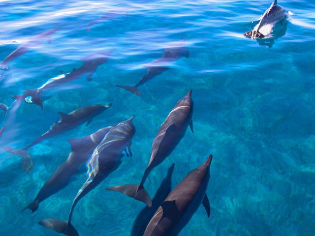 ハワイでの野生のイルカとの遊泳規制について老舗ツアー会社に問い合わせた結果