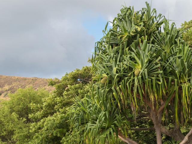 ハワイの隣島でスマホを使う予定の人が気をつけること