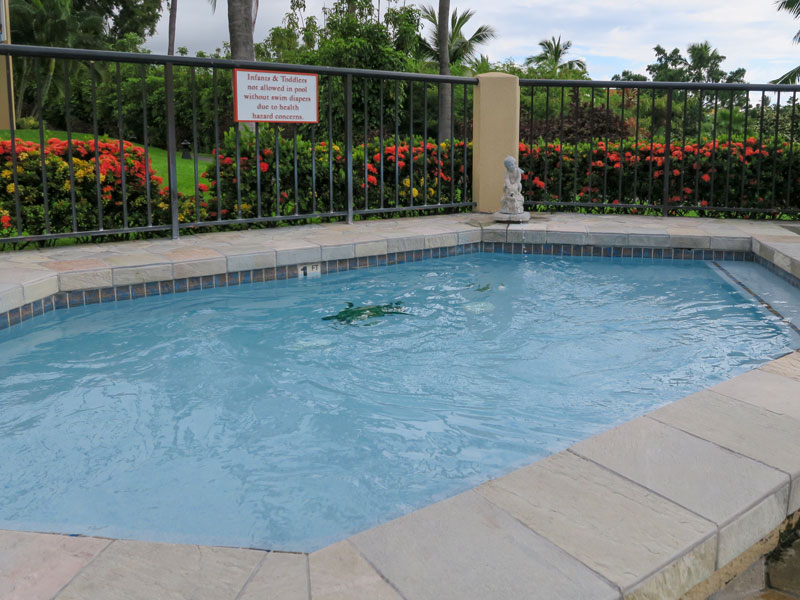 1歳児とコナ・コースト・リゾートのプールで遊んだ感想