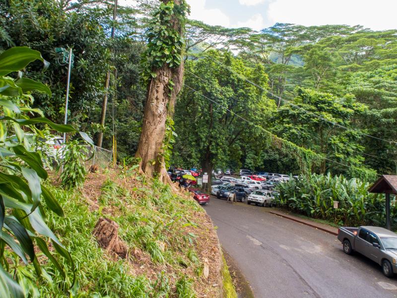 ハワイで森林ハイキングする前に確認すべきこと