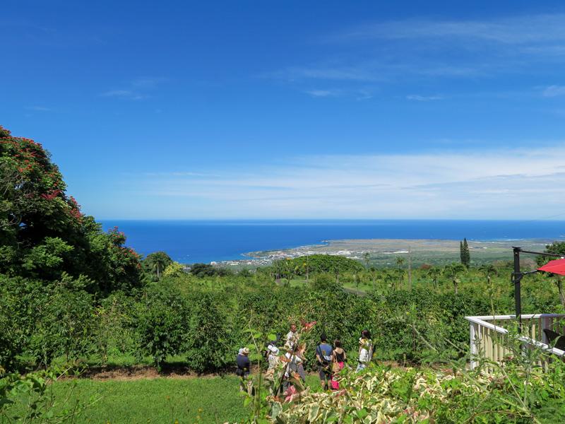 5歳児・1歳児連れでハワイ島UCCコーヒー農園を訪れた感想